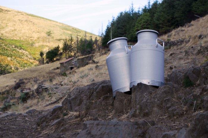 Bilhas para transporte de leite de cabra.
