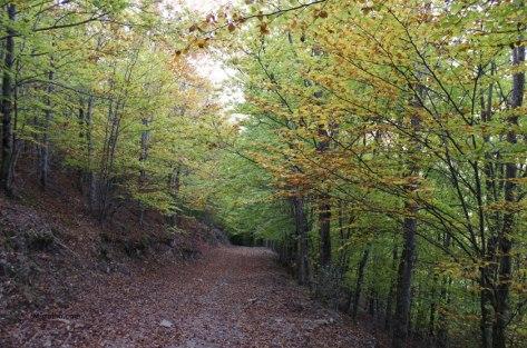 Bosque de faias no outono, na Serra da Estrela